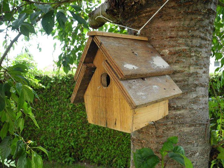 Construire un nichoir pour les oiseaux - Nichoir pour oiseaux ...