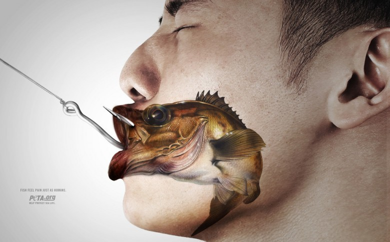 Surpêche et souffrance des poissons, doit-on fermer les yeux ?