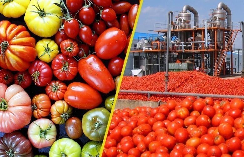 De 73 variétés de melons à 1 seule en 2014… Comment en est-on arrivé là ?