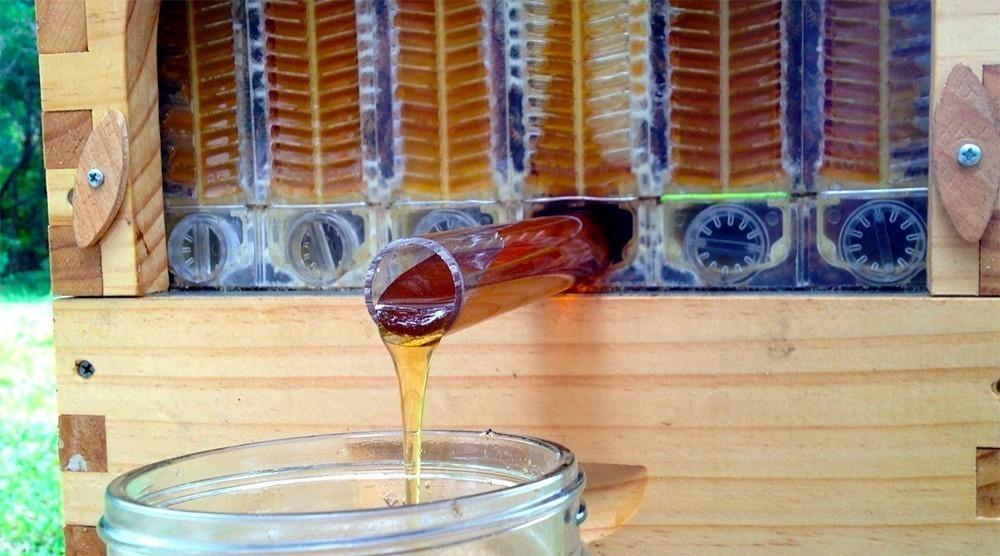 honey-4