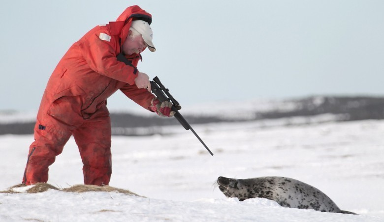 Feu vert pour tuer 400 000 phoques. L'autre visage de l'industrie du luxe.