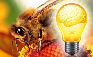 les abeilles envahissent les murs de londres et c est positif mr mondialisation. Black Bedroom Furniture Sets. Home Design Ideas