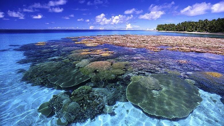 beautiful-coral-reef