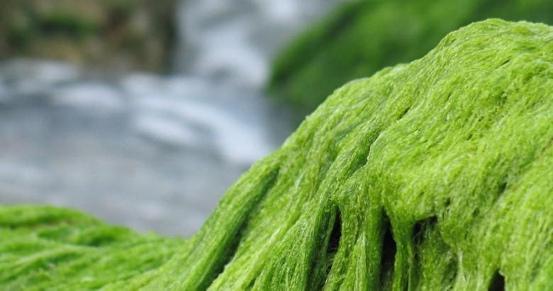 string-algae-featured