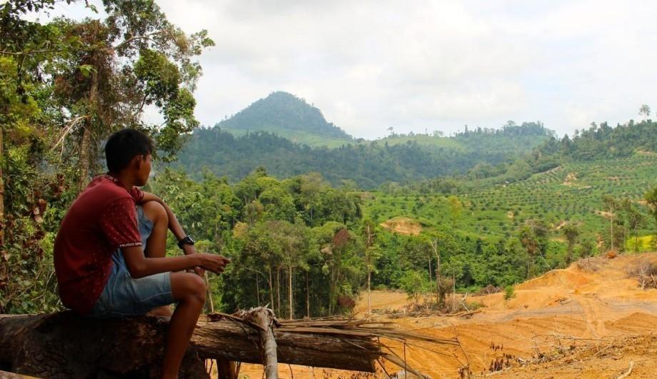 Un drone révèle le vrai visage de la déforestation en Indonésie