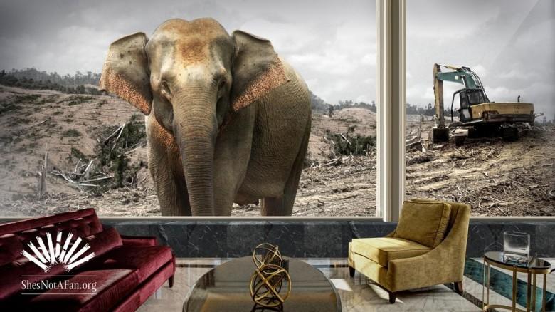 mandarin-elephant-2560x1440-justlogo-elephant1-lr_1cuonmx