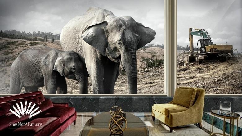 mandarin-elephant-2560x1440-justlogo-elephant2-mr