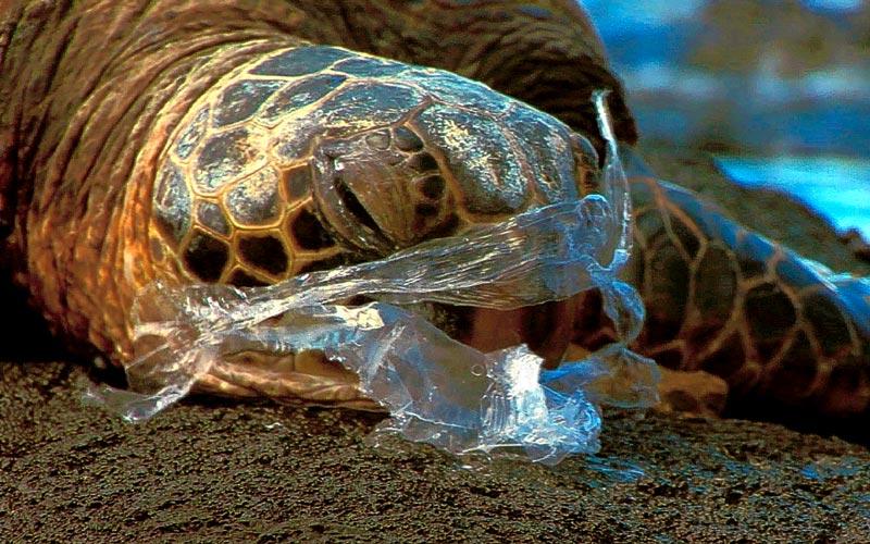 Bientôt la fin du sac en plastique en Europe ?