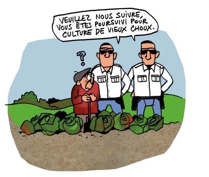 OGM : Quand l'Union européenne se soumet au diktat des cartels semenciers Vieux-choux-e1430608406772