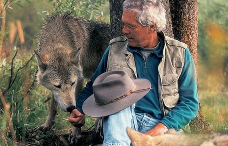 Un couple a vécu 6 ans avec des loups pour changer notre vision sur eux AR-301219904.jpgmaxw800q90-e1435632959692