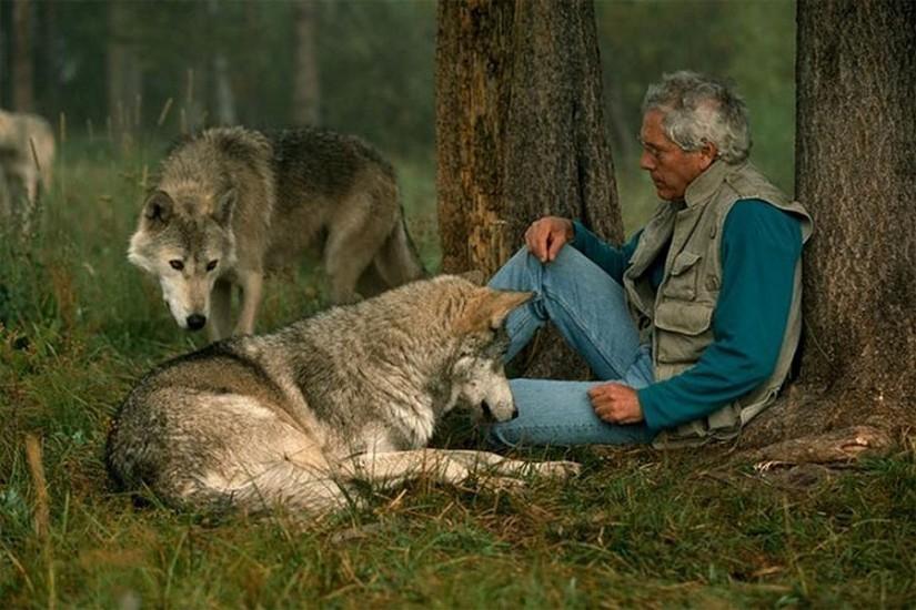 Un couple a vécu 6 ans avec des loups pour changer notre vision sur eux L11-825x550