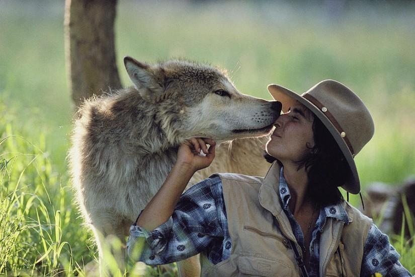 Фото вовків