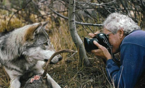 Un couple a vécu 6 ans avec des loups pour changer notre vision sur eux L3
