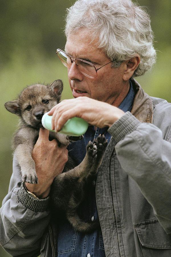 Un couple a vécu 6 ans avec des loups pour changer notre vision sur eux L41