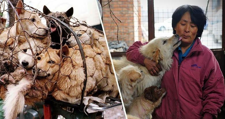 Yulin : une chinoise fait 2500km pour sauver 100 chiens d'une mort certaine