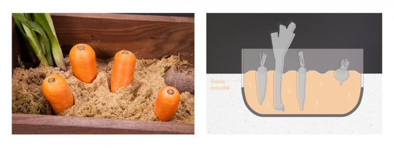 La conservation des fruits et légumes de façon naturel Carrots-55-e1436598569734