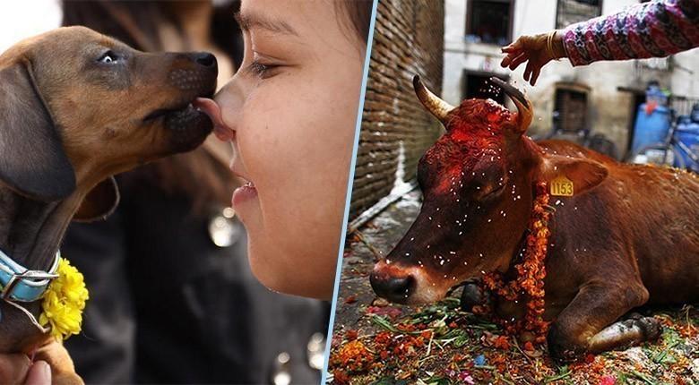 Le Népal met fin au plus grand sacrifice animal au monde