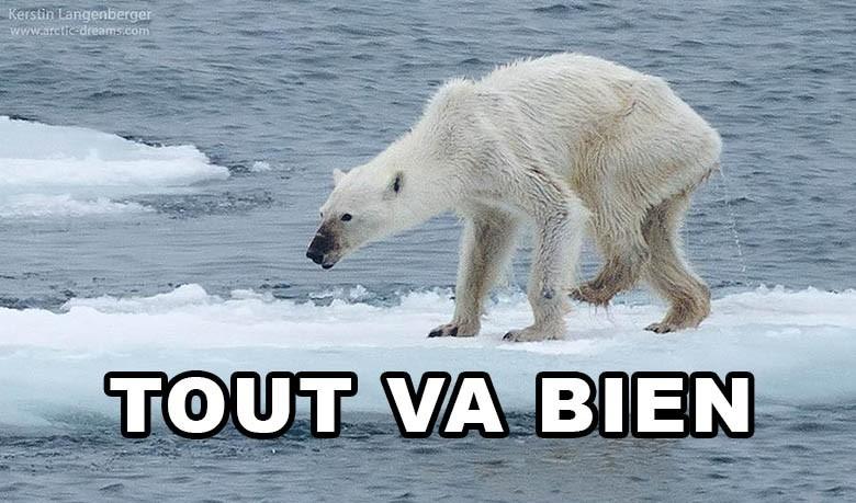 Une photo d'ours polaire affamé fait le tour du monde