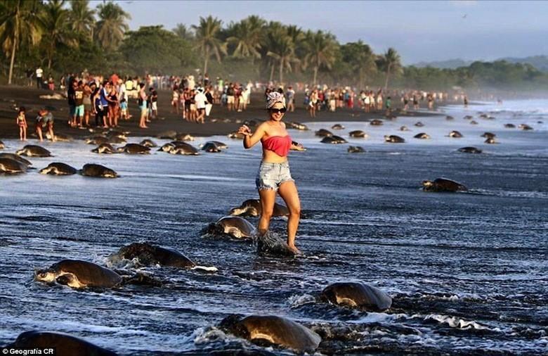 Des touristes perturbent la ponte de tortues de mer au Costa Rica