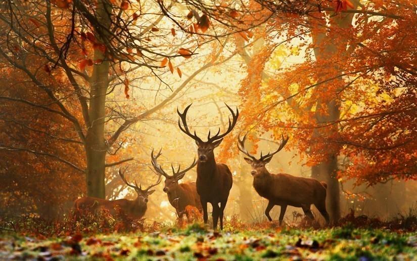 C'est de toute beauté : sites et lieux magnifiques de notre monde.  5-825x516
