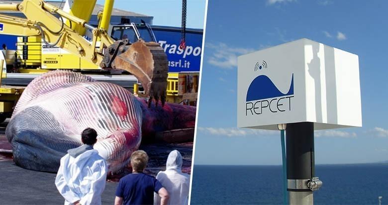 Ils inventent un système pour sauver les baleines et ont besoin de votre aide