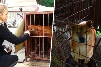 Lola, la femme qui veut mettre fin à la consommation des chiens