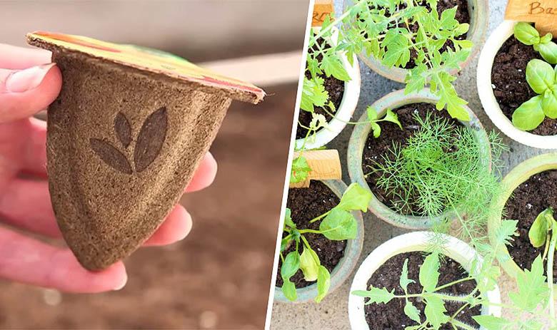 Des pots biodégradables pour un semis éco-friendly