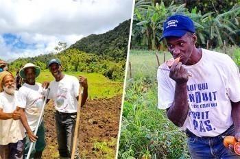 Ils défendent l'agriculture traditionnelle en Martinique