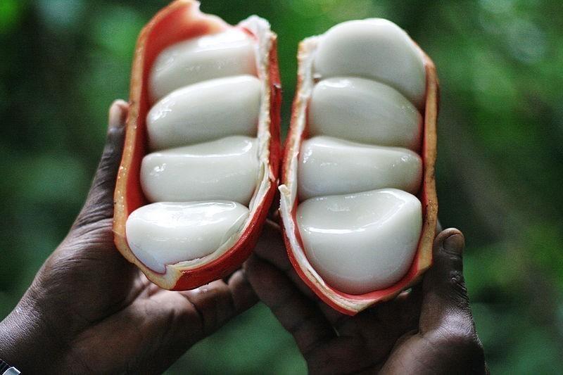 Tayap, premier village écologique du Cameroun