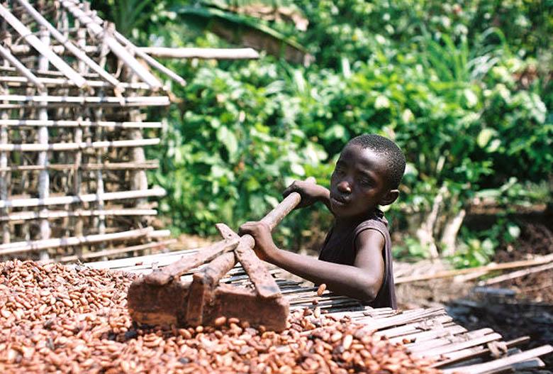 Une étude dévoile la face cachée du chocolat : entre déforestation, pollution et esclavagisme