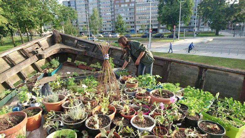 Belgique : ils construisent une arche végétale en pleine ville !