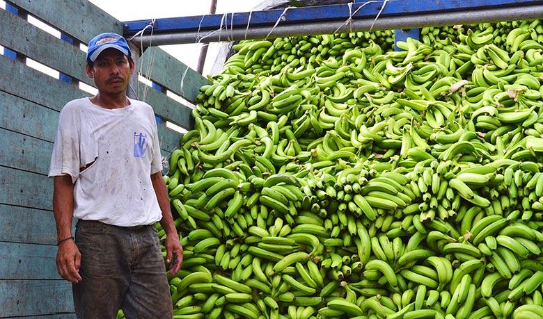 lidle_ananas_banane