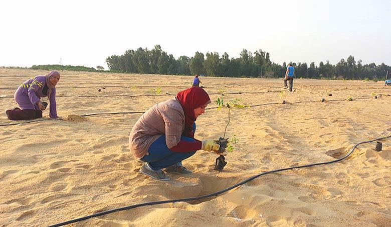 Faire pousser une forêt dans le désert : l'Égypte l'a fait !