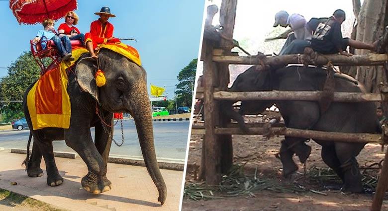 Non, TripAdvisor ne bannira pas les attractions maltraitant les animaux de son site