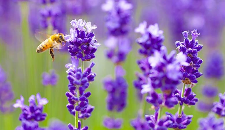 Deux jeunes chercheurs veulent sauver les abeilles