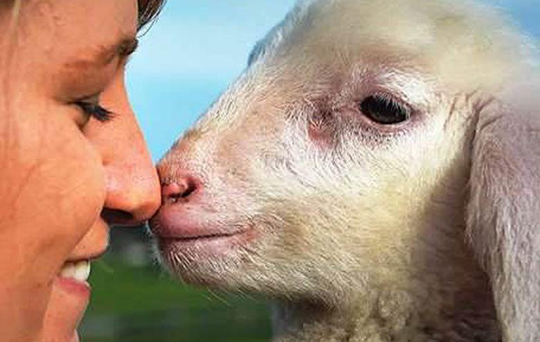 Des milliers d'animaux sauvés : l'épatante histoire de Gut Aiderbichl
