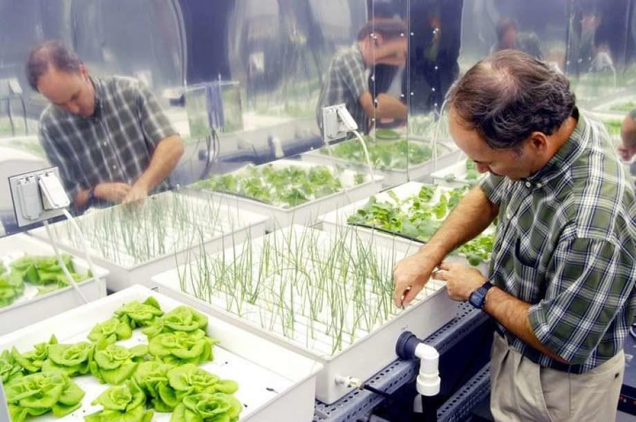 La liste de plantes d'intérieur anti-pollution de la NASA